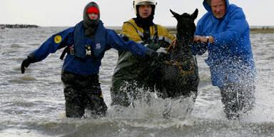 Hundert Pferde aus Hochwasser befreit