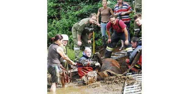Pferd in Kärnten fast in Sumpf versunken