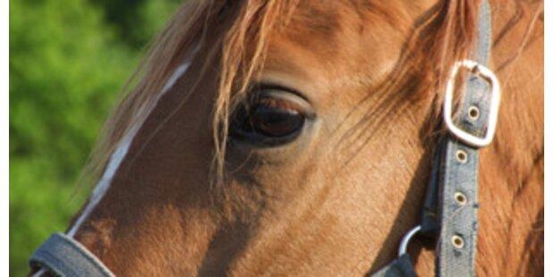 Tierquäler stach auf Pferd ein