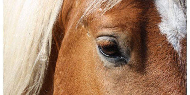 Reiterin von Pferd niedergetreten