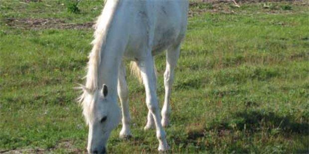 Pferd durch Frontal-Crash getötet
