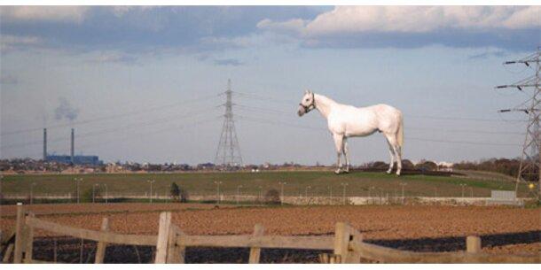 Gigantisches weißes Pferd für England