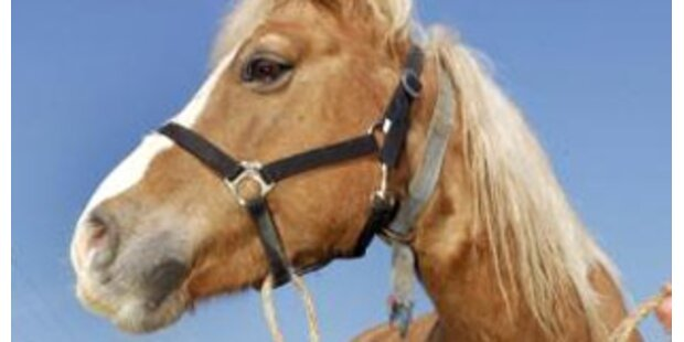 Betrunkener überfuhr Fußgänger und Pferd