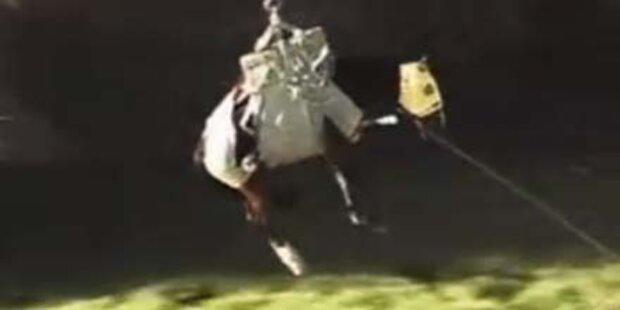 Pferd steckte fünf Tage in Sandbank fest