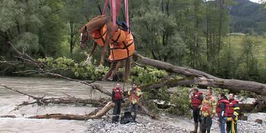 Enns: Pferd vor Ertrinken gerettet