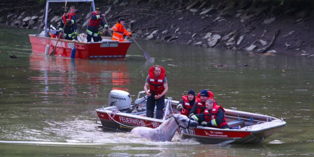 Feuerwehr rettet Pferd aus der Traun
