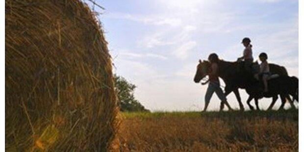 Pferd verletzt Dreijährigen schwer