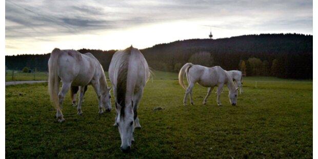 Pferde in gestopptem Lkw bleiben vorerst hier