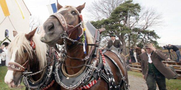 Unfall mit Pferdekutsche