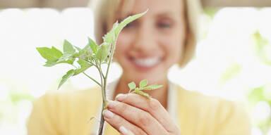 Pflanzen streicheln sorgt für Stressabbau