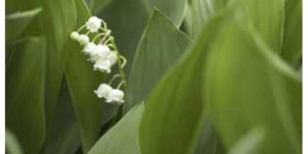 Pflanzen können hören