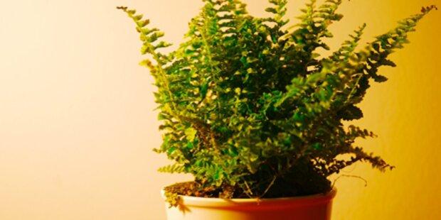 Die richtige Pflanze für jeden Raum