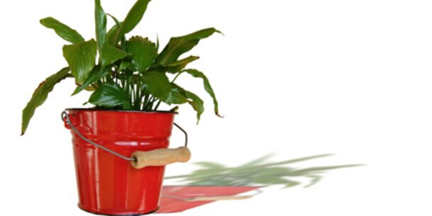 Zimmerpflanzen gegen Büro-Krankheiten