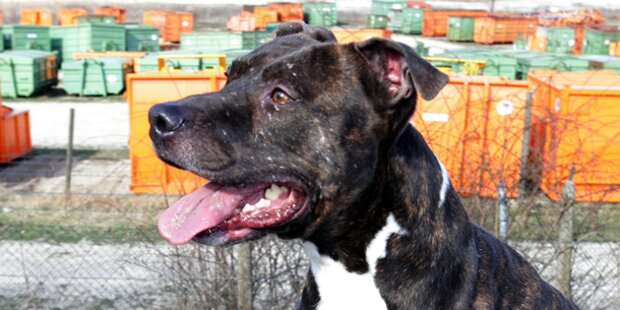 USA: Hund apportierte Menschenbein
