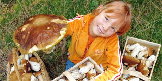 Pilze beschlagnahmt