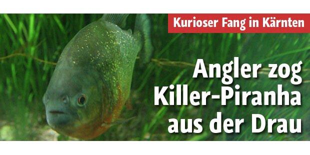 Angler zog Piranha aus der Drau