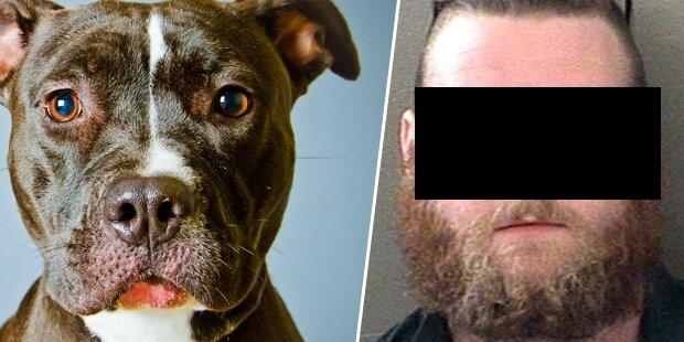 Perverser hatte 100-mal Sex mit seinem Hund