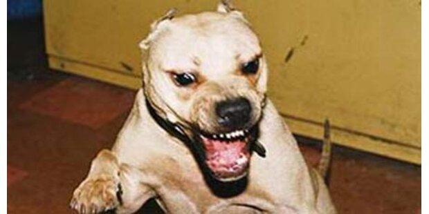 Hund zerbiss 4 Reifen von Polizeiwagen