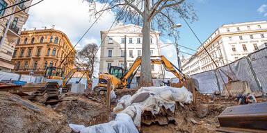 Operation Platane: Größte Baumrettung aller Zeiten in Wien