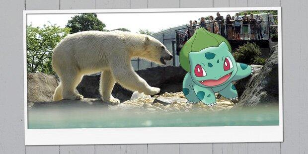 oe24 sucht die besten Pokémon-Fotos