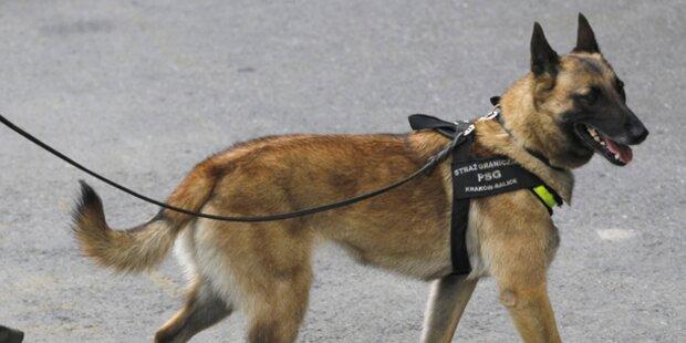 Polizei-Hund sprengt Hasch-Plantage