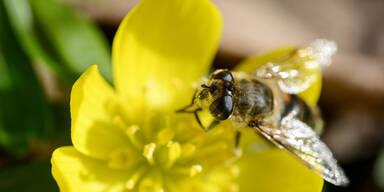 Diese Pollen fliegen jetzt schon