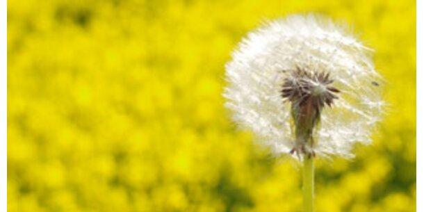 Allergiker wissen oft nicht, dass sie krank sind
