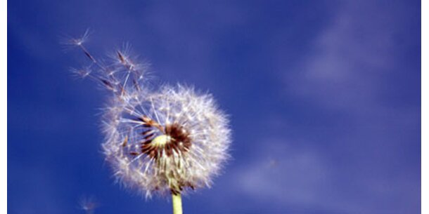 Jugendliche leiden häufiger an Allergien