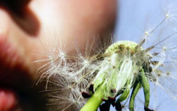 Neue Gräserpille gegen Heuschnupfen