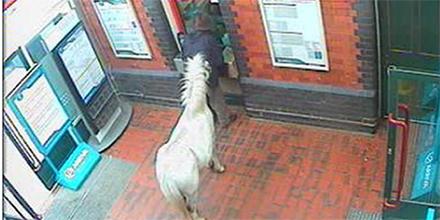 Pony Zug