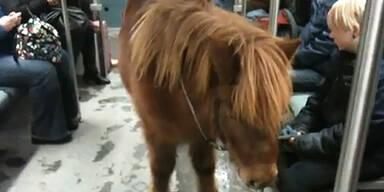 Pony in der S-Bahn