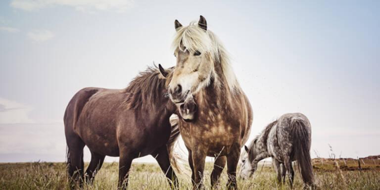 Linz: Tierquäler verletzt Pony