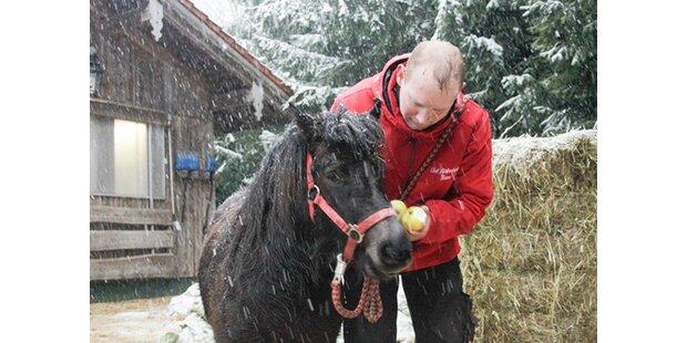 Gerettet: Pony sollte Hundefutter werden
