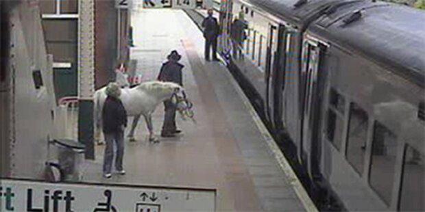 Mann wollte mit Pony in Zug einsteigen