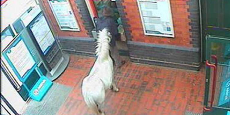 Mann wollte mit Pony in Zug steigen