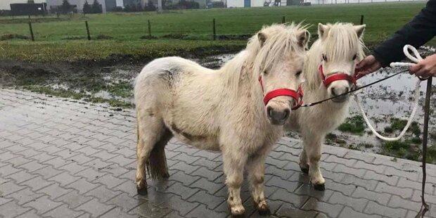 Aufruf: Süße Ponys vor Schlachter retten