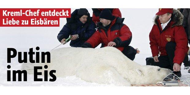 Putin im Eis - aus Liebe zu Eisbären