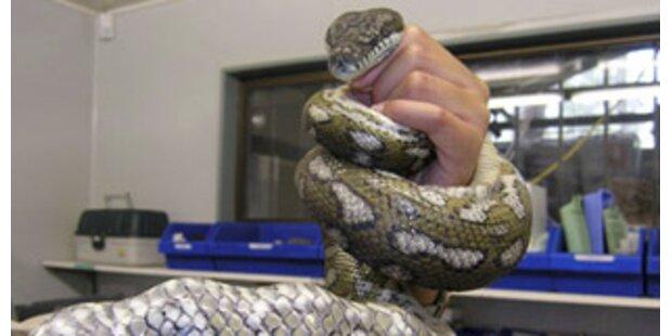 Fast 100 Schlangen in Hütte sich selbst überlassen