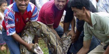 Diese Python verschlag elf Wachhunde (c) REUTERS
