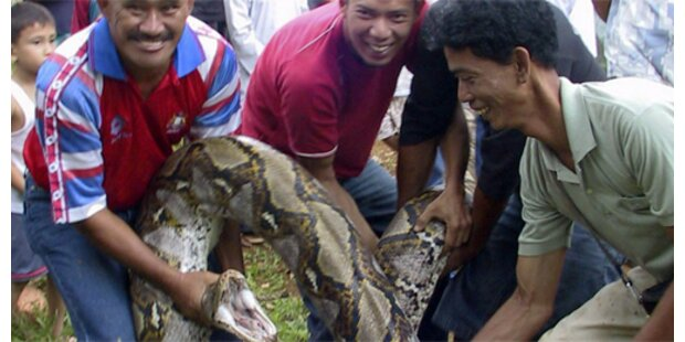 Python frisst elf Wachhunde in Malaysia auf