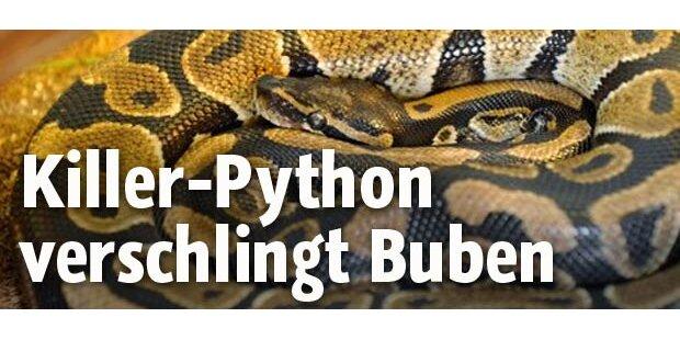 Python verschlingt Buben