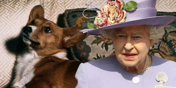 Hunde der Queen bekommen täglich Steaks