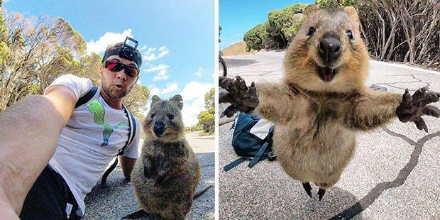 Mini-Känguru entzückt das Internet