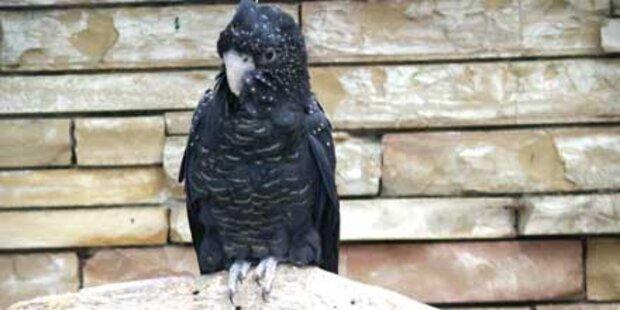 Kakadu muss vor Gericht vorfliegen