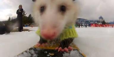 Ratatouille Opossum