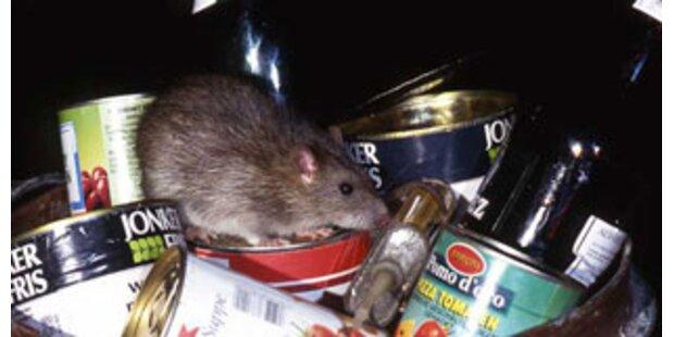 Paris rückt den Ratten auf den Pelz