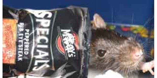 Rattenkopf in koreanischer Chipstüte gefunden