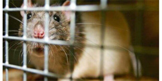 37 Tiere in Salzburger Wohnung beschlagnahmt