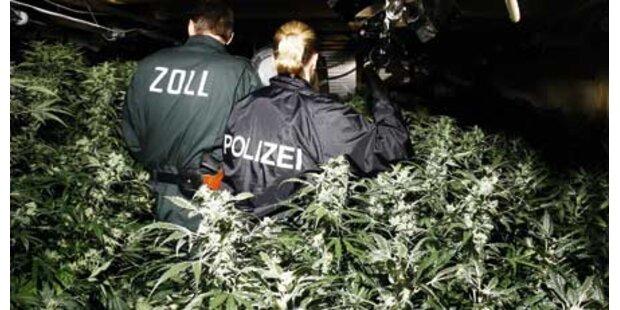 Drogenring in NÖ aufgeflogen