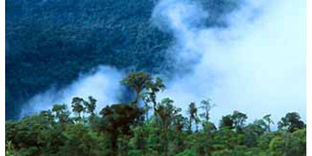 Regenwald-Pilz als nächster Biokraftstoff